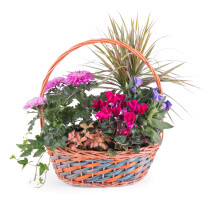 Basket of Plants