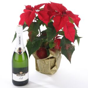 Poinsettia Plant and  Sparkling Wine